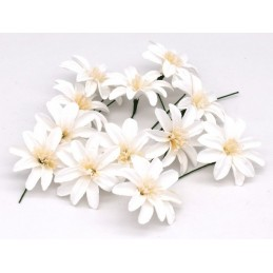 Fiori decorativi margherita colore bianco