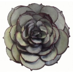 Fustella bigz fiore succulent